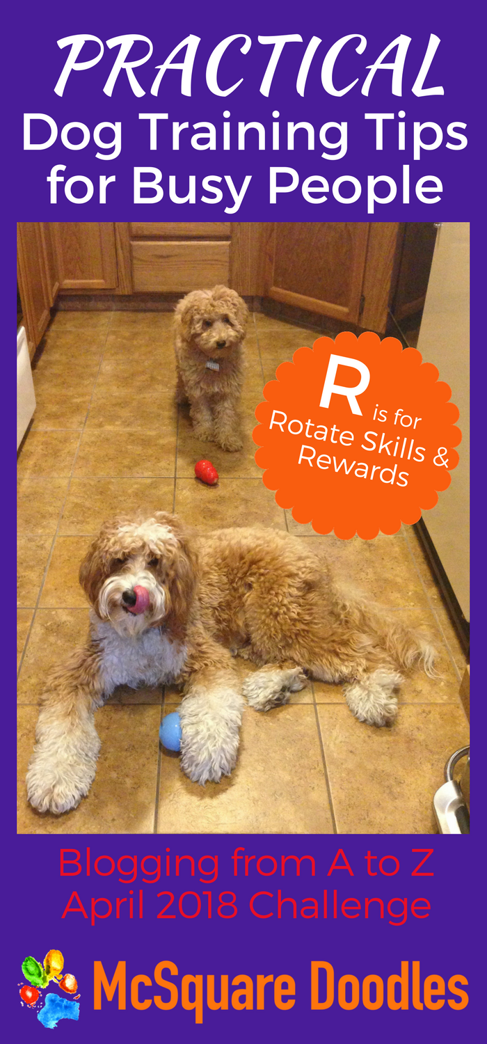 #AtoZChallenge - R is for Rotate Skills and Rewards - Practical Dog Training Tips for Busy People on McSquare Doodles