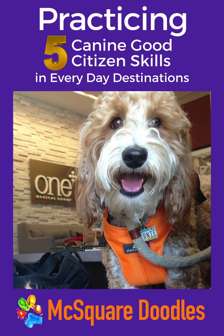 If you want to gauge whether or not your therapy dog in training will respond on cue, then exploring a variety of settings is a valuable use of your time. This practice will also offer you different opportunities to work on distinct skills to help your dog become a certified therapy dog. So where do you go? Read on...