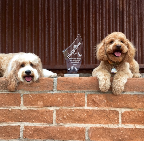 Bernie and Lizzie McSquare feel honored for the vote of confidence from the BlogPaws community. Winning the Best New Pet Blog Award has them pawsitively over-the-moon!