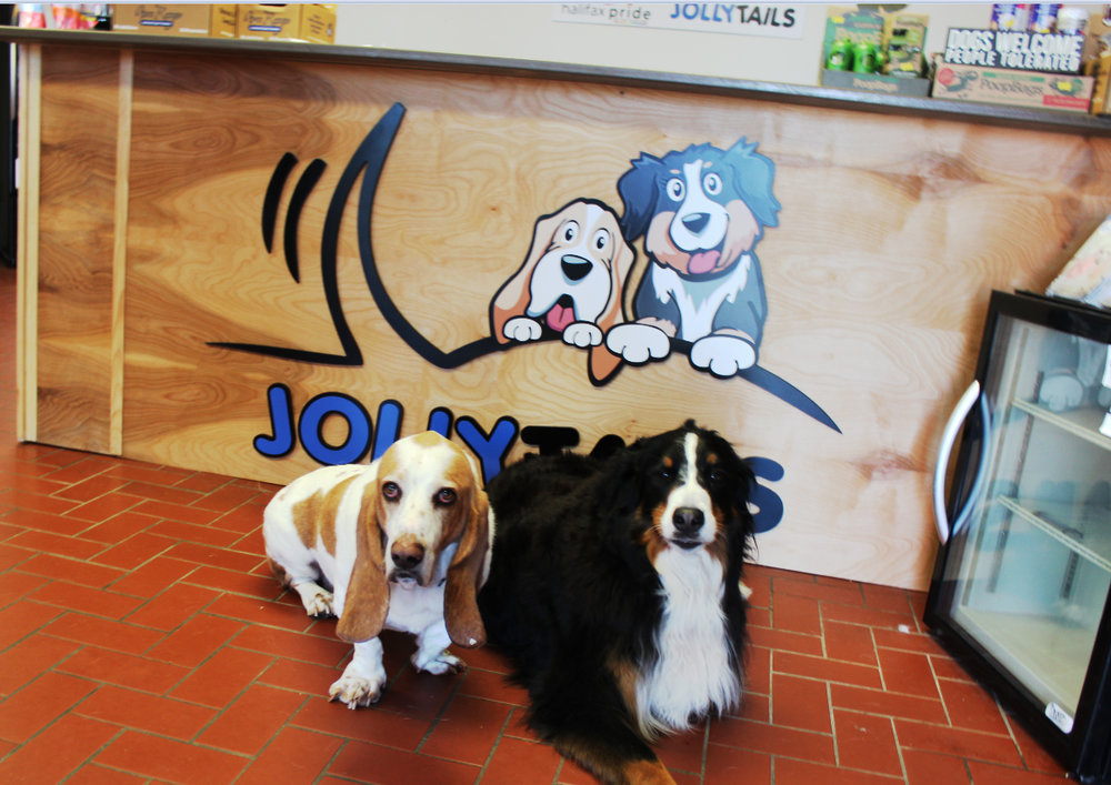 Our Founders - The inspiration behind Jollytails: George the Basset Hound & Freyja the Bernese Mountain Dog