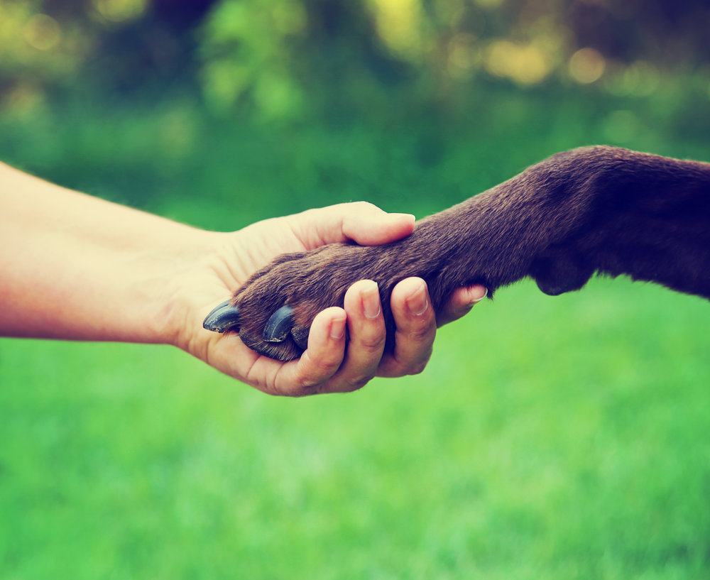 Strengthen the bond between you and your pet   Dog Training    Learn More