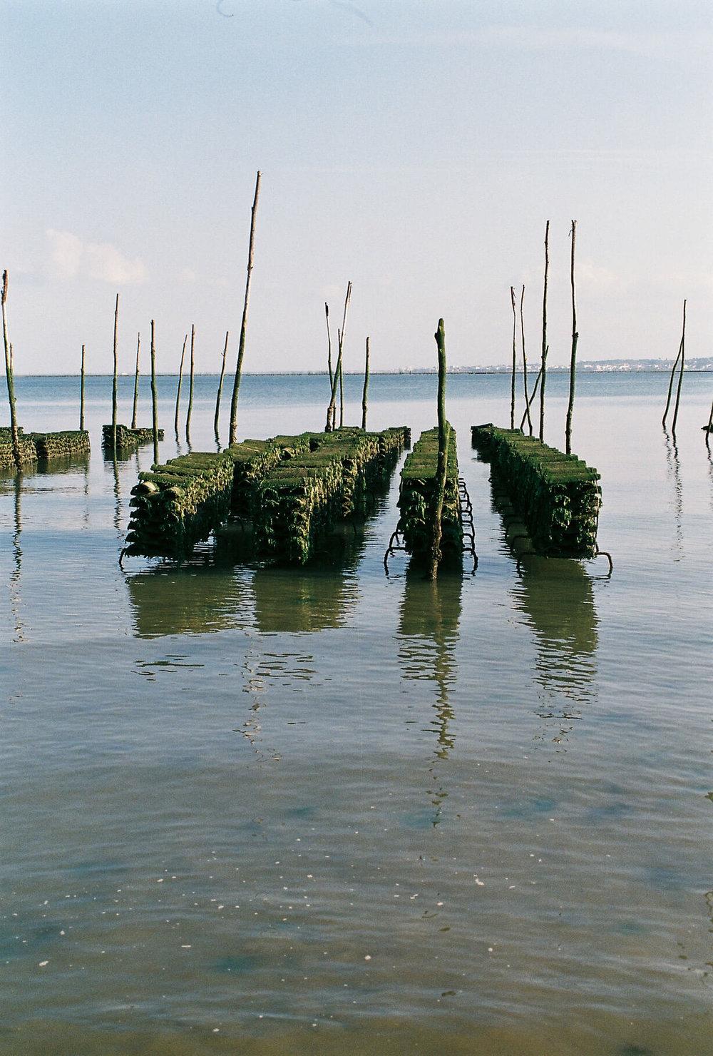 oysterfarmer02.jpg
