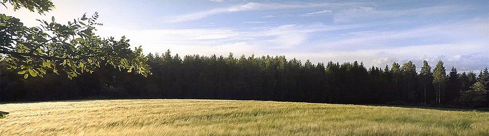 Field - Light.jpg