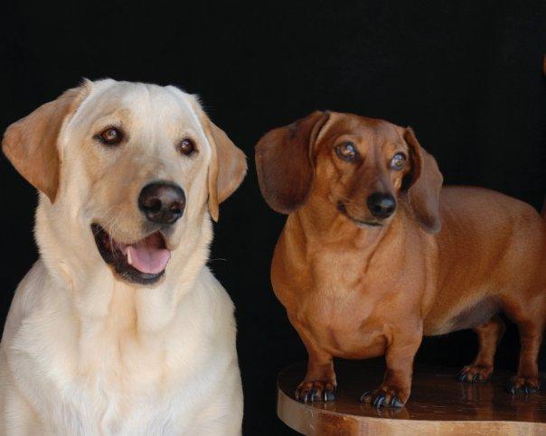 Doggie-Babies.jpg