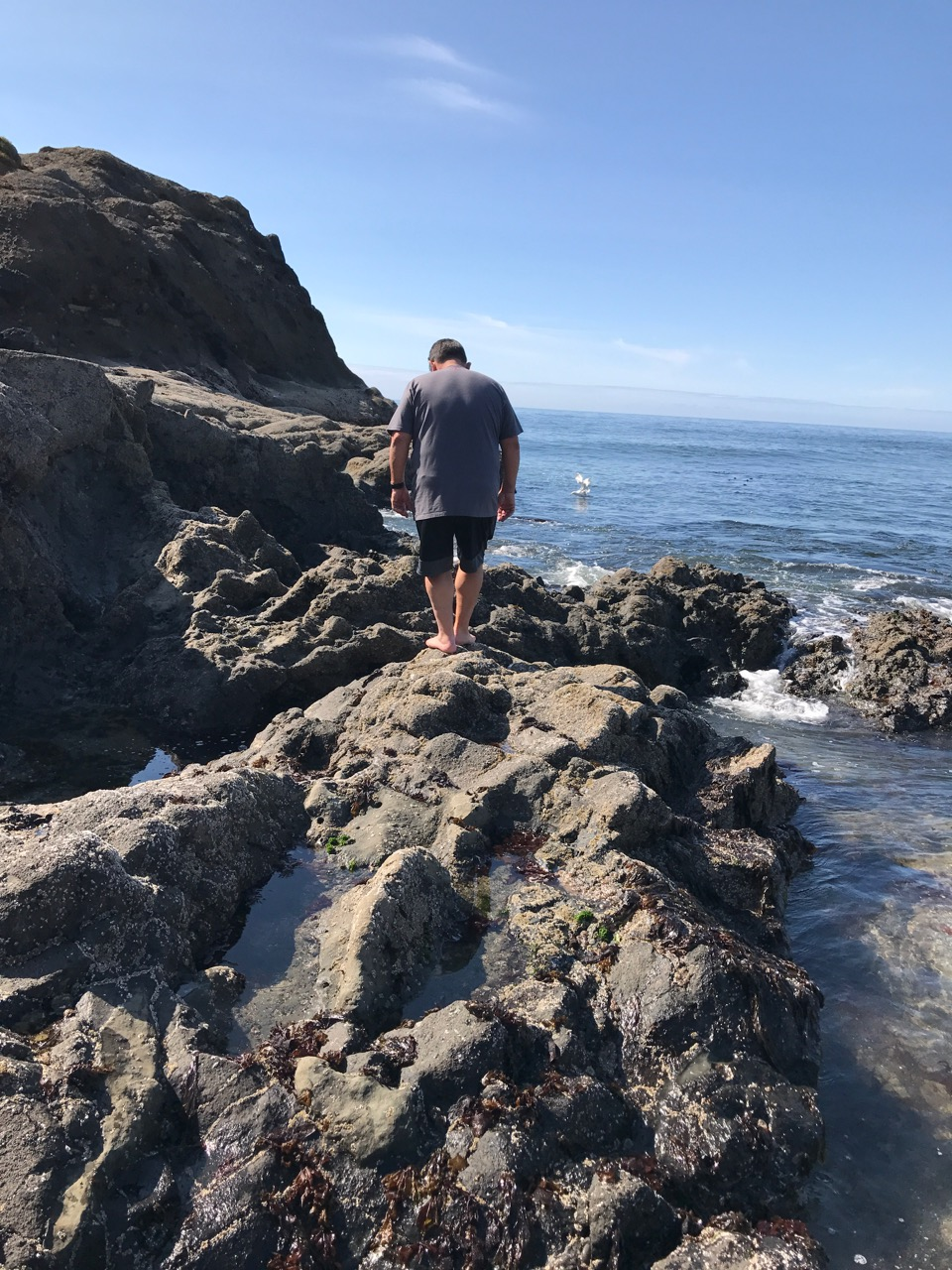 Leroy Tide-Pooling