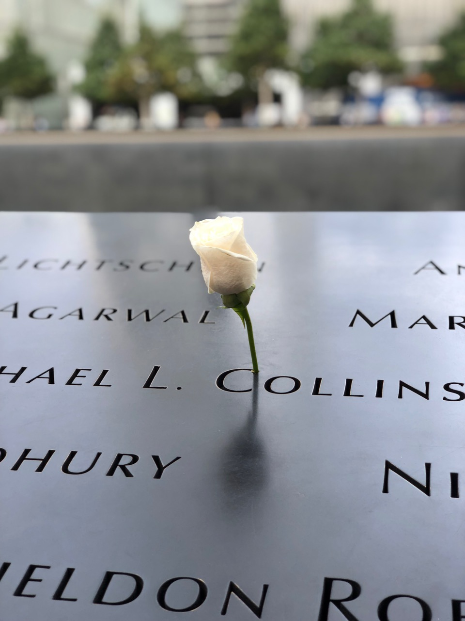 9/11 Memorial - White roses are placed near the names on the victim's birthday.