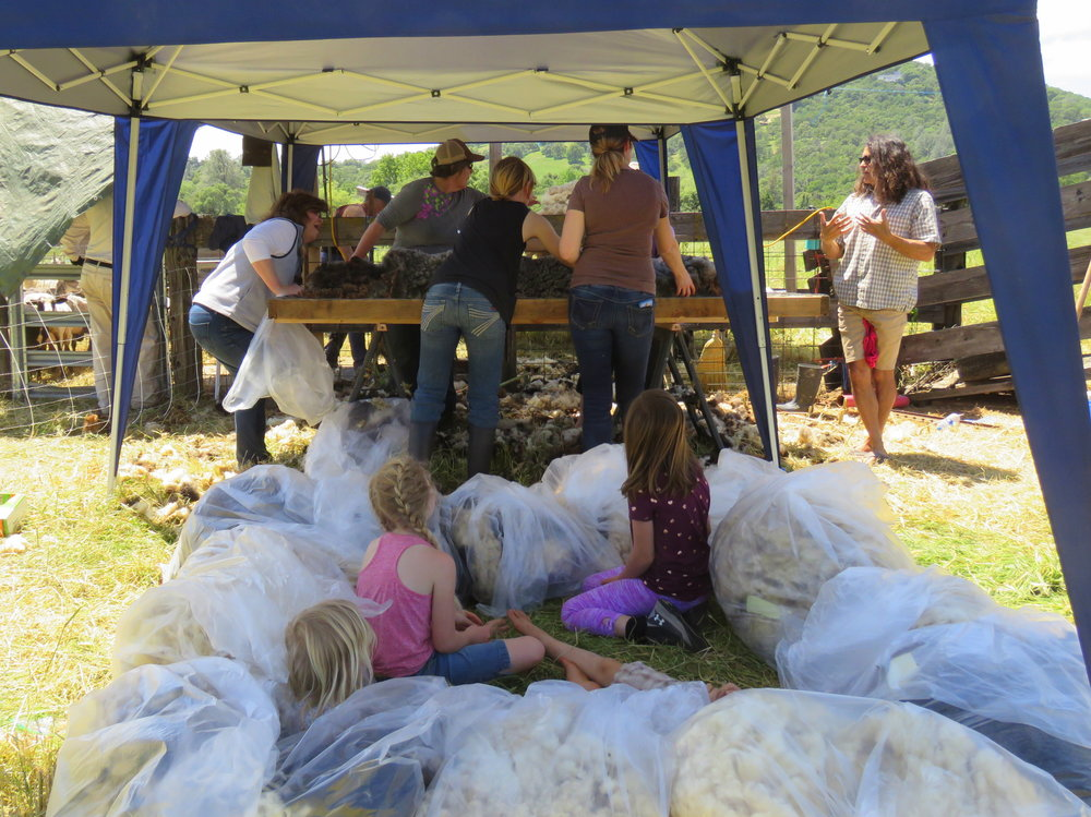 The bagged wool also makes a handy fort, until the pile gets too big. (Note--if you put your fleece in a plastic bag, keep it in the shade, otherwise condensation will make it damp).
