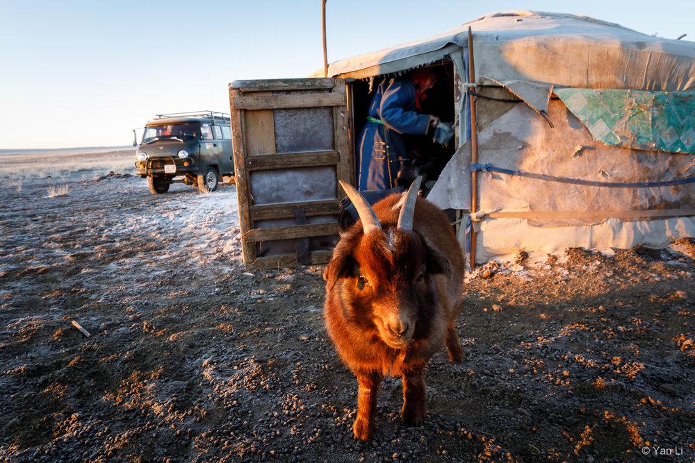 201612_Mongolia-9932.jpg