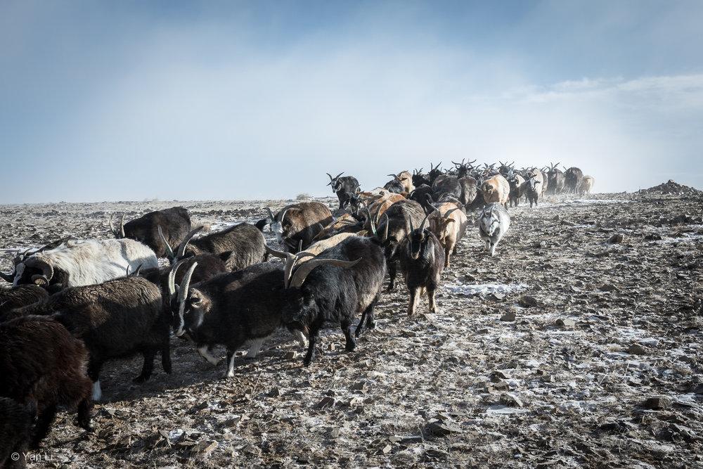 201612_Mongolia-8734.jpg