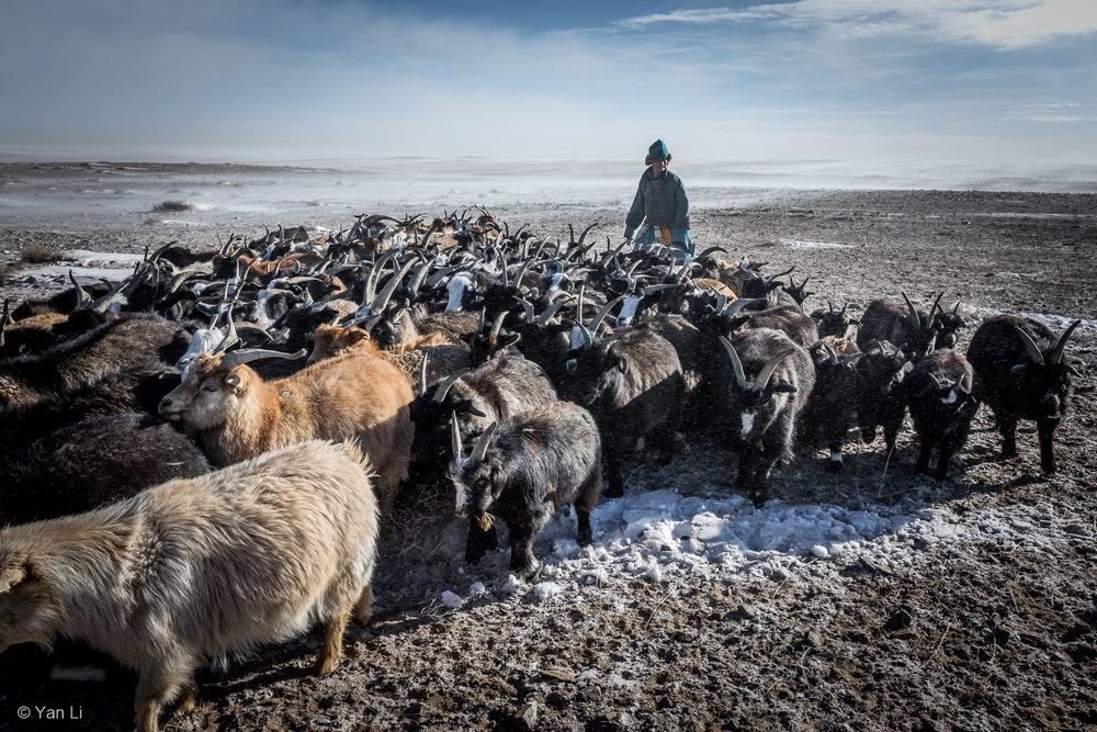 201612_Mongolia-8648.jpg