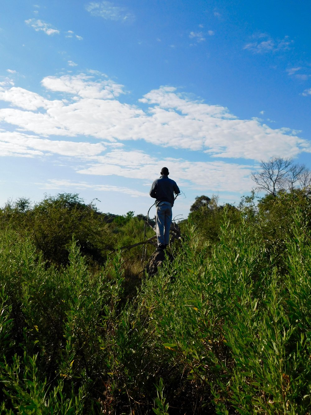 Being open to the world (and scouting for a pack of elephants), Okavango Delta, Botswana
