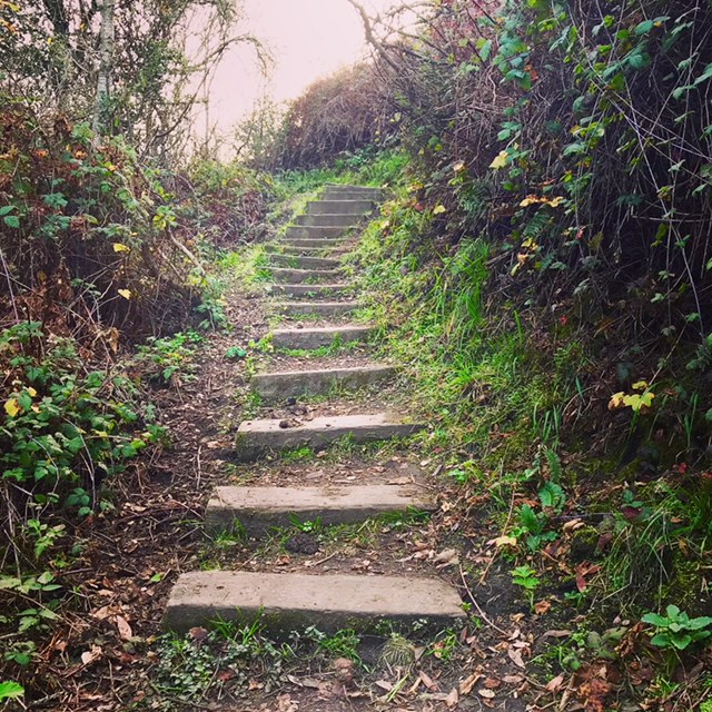 Steps on the Laurel Canyon Trail, Berkeley, CA
