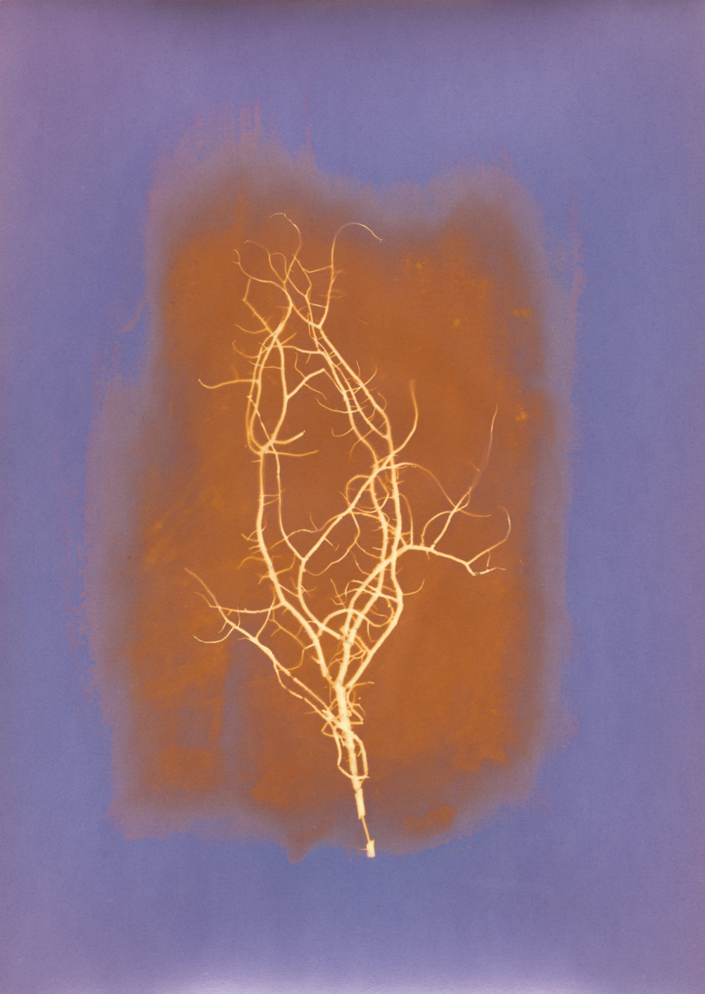 orange moss spotted.jpg