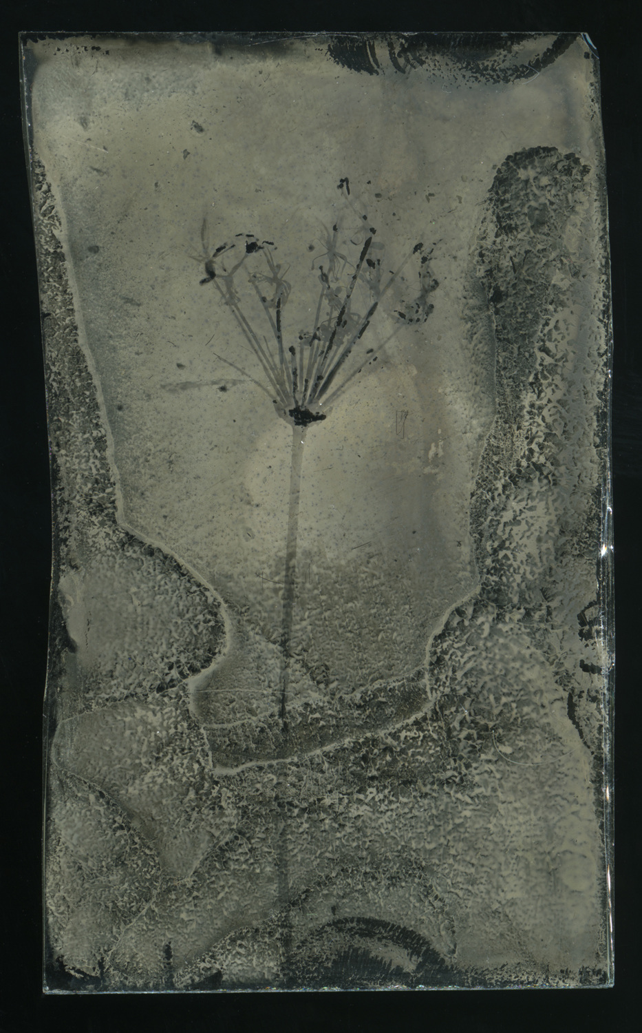 wet plate glass negative.jpg