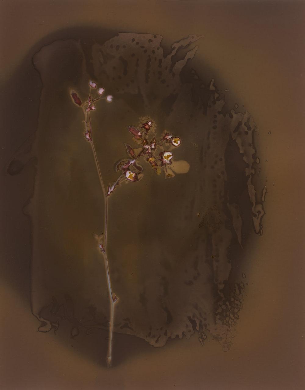 blackberry blossom002.jpg