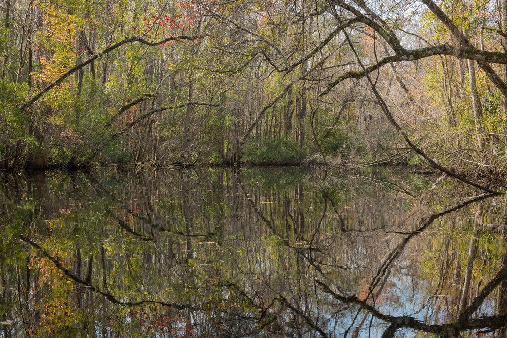 Creek Tangles