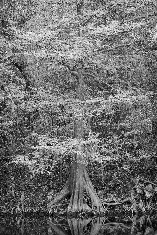 Cypress 3