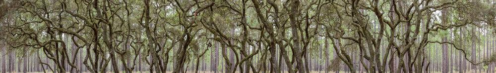 Oak Hammock 2