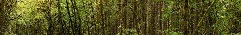 Upper Cascades Study 423