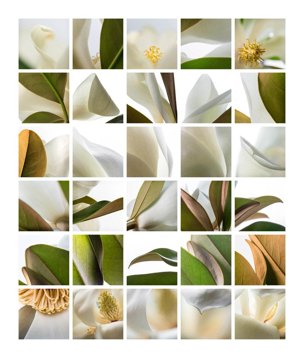 Magnolia Series
