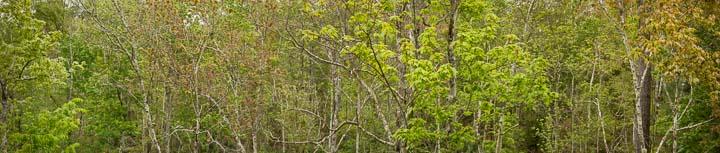 Spring Forest - Tillie Fowler RP