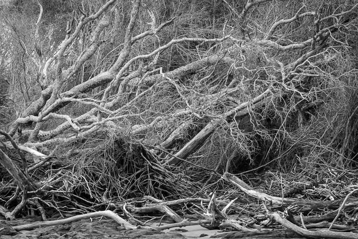 Driftwood Tangles
