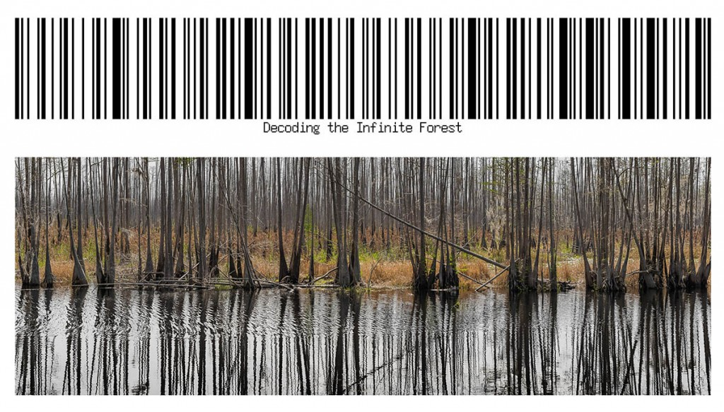 Decoding the Infinite Forest