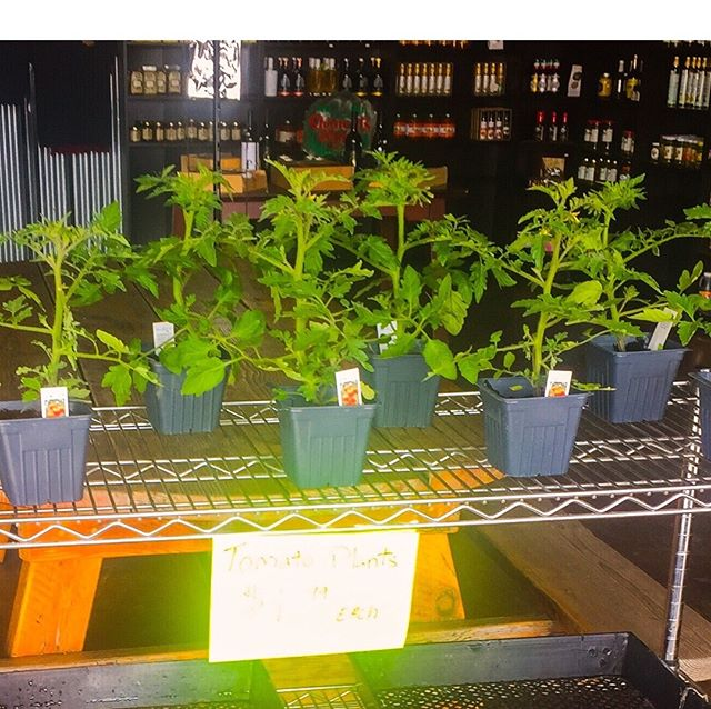 Planting your home garden? We have Sun Gold and Super Sweet 100 tomato plants available $1.99/each. Quantity limited.
