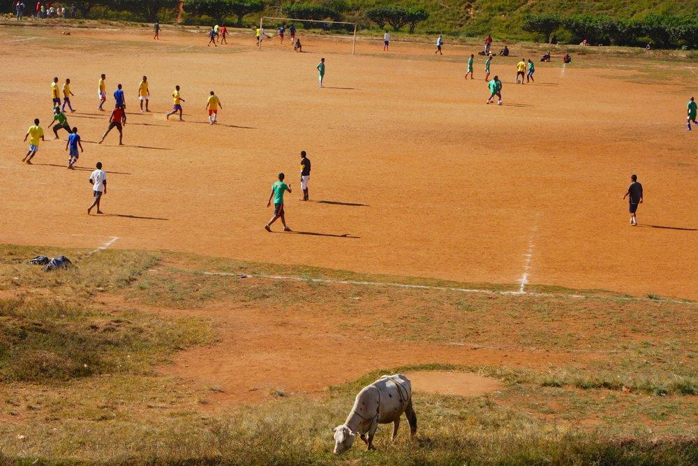 Playing football alongside zebu at the University of Antananarivo.