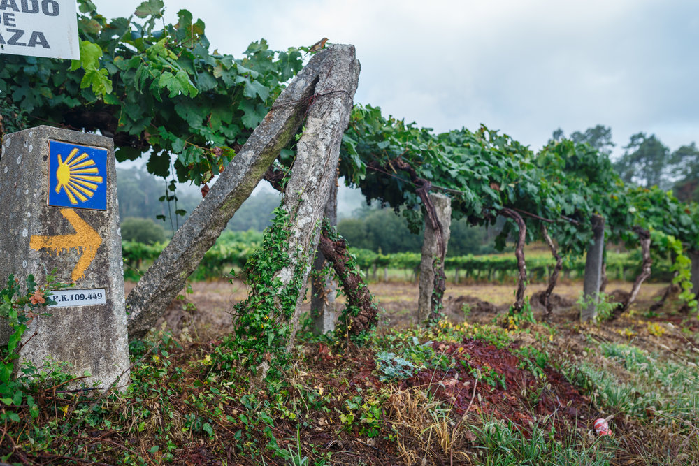 Crossing through endless kilometers of vineyards in the Galician countryside.