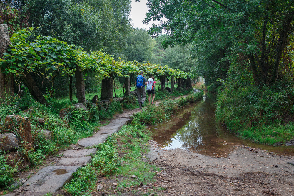 During our first day on the camino, just outside of Tuí, Spain.