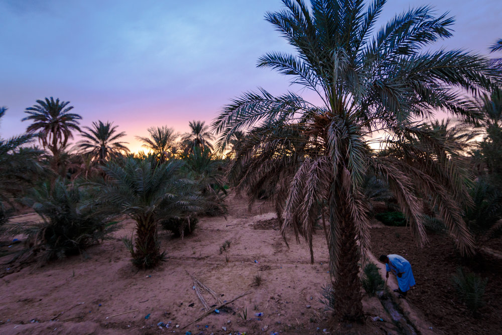 Sun setting on the desert palms of Merzouga.