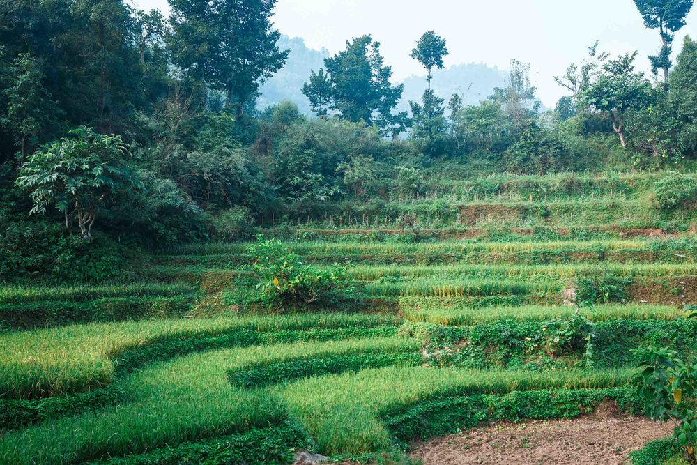 Rice paddies lined the path along the way down.