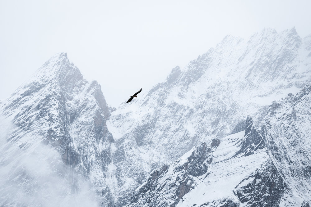 Birds silhouetted against the glaciers in Dharamsala.