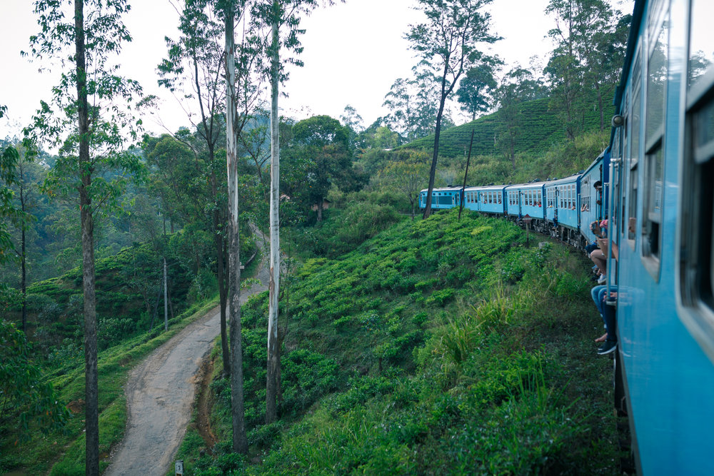 Looking out the window of the blue train and out onto the tea plantations.