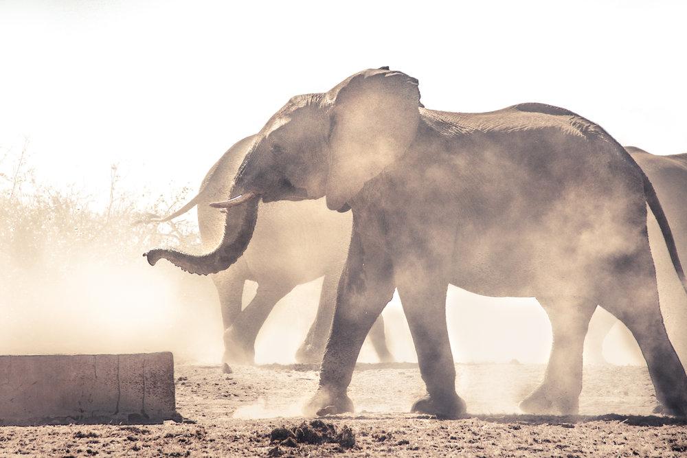 Elephants in the Dust