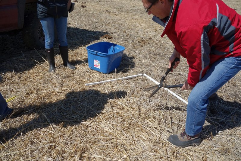 Shawn Cabak (MBAG) samples for forage residue in April of 2016