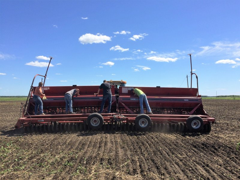 Seeding the polycrop in mid-June.