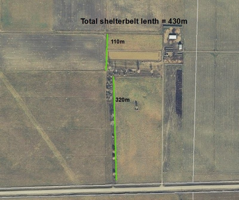 Shelterbelt design at the Johnson Farm indicating the location of species and length of rows (2016)
