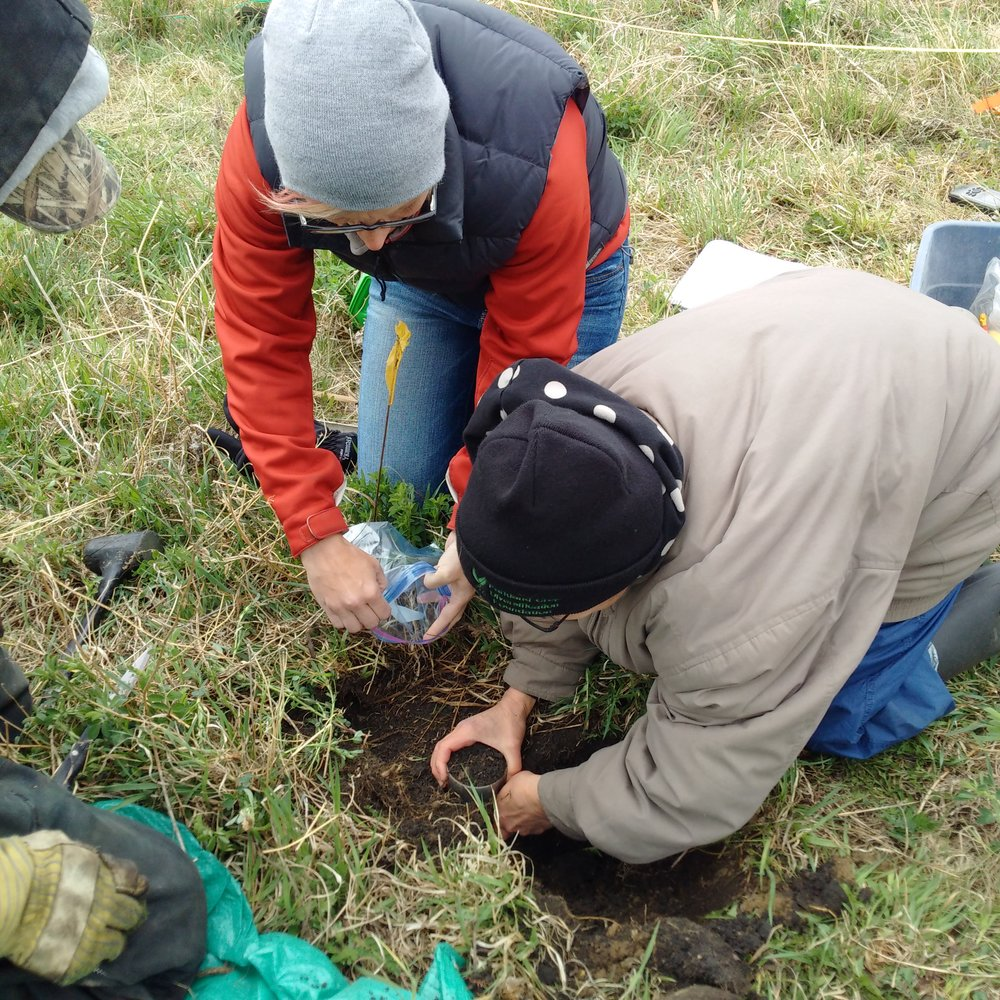 Soil Sampling for Baseline Data in 2016