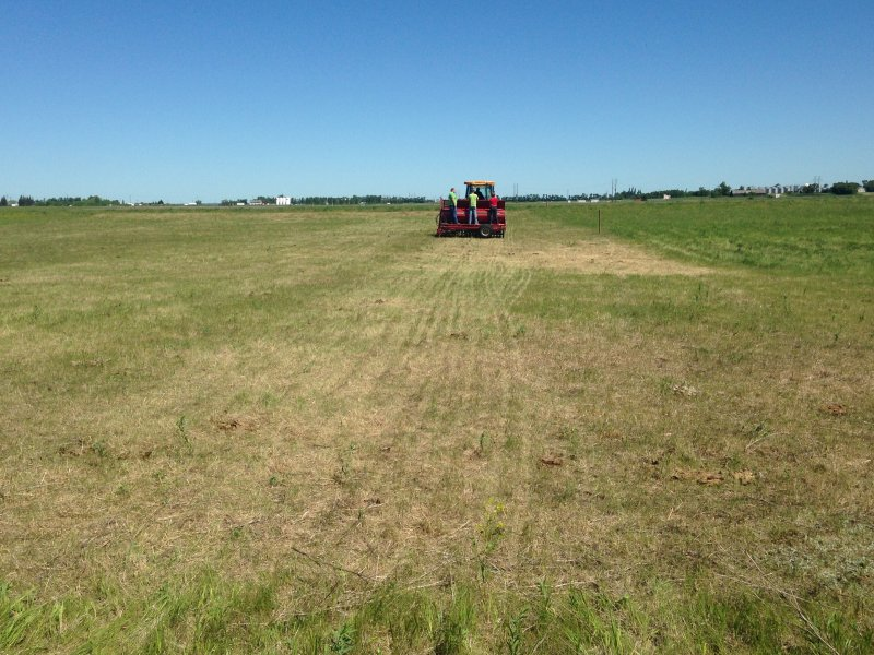 Sod seeding into pasture that was grazed heavily just prior (June 2016)