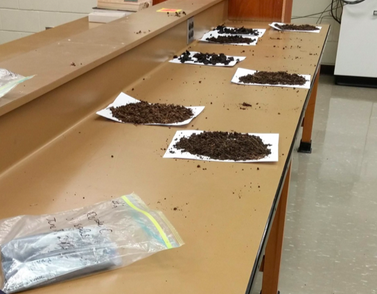 Partial air drying of a soil sample in the laboratory at Brandon University, June 28, 2016; photo by Kaylin Liddle.