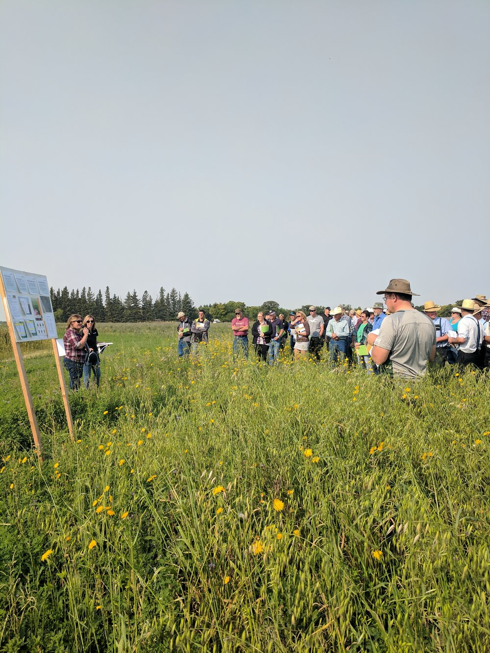 Kim Wolfe, MB Agriculture, discussing her pollinator project at the Brookdale Pasture Day 2017