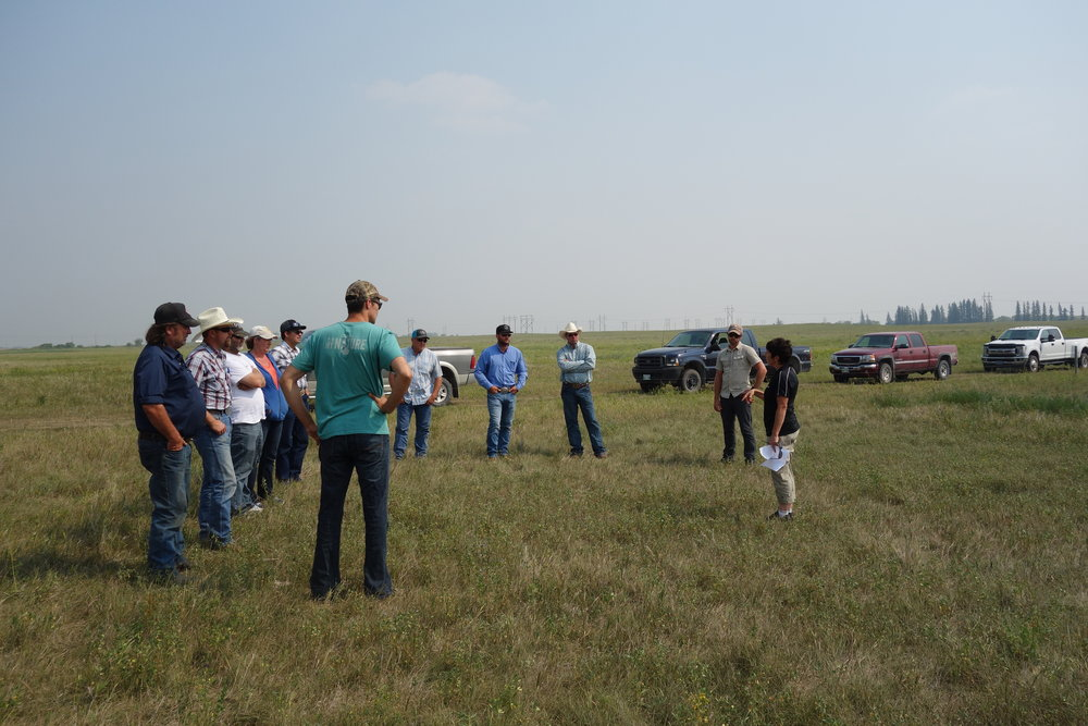 Jane Thornton from MB Agriculture talking to tour participants about her sod and mob seeding project at 1st Street during the Grazing Workshop 2018