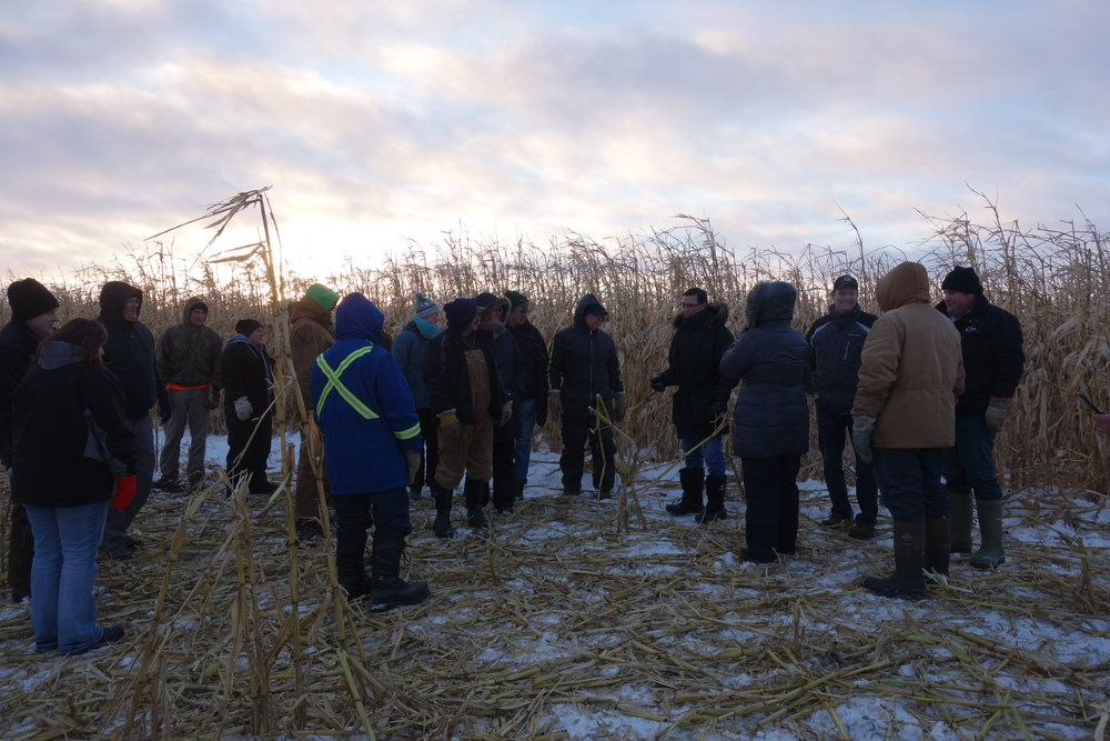 Participants checking out the corn grazing trial at the Winter Grazing Tour 2016
