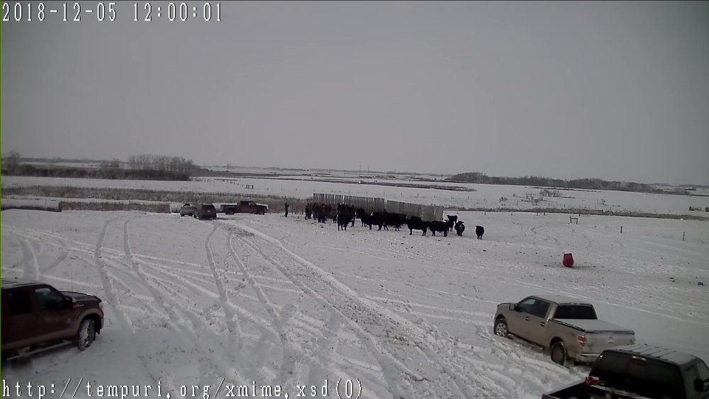 Photo from the pasture cow cam at the winter grazing tour 2018