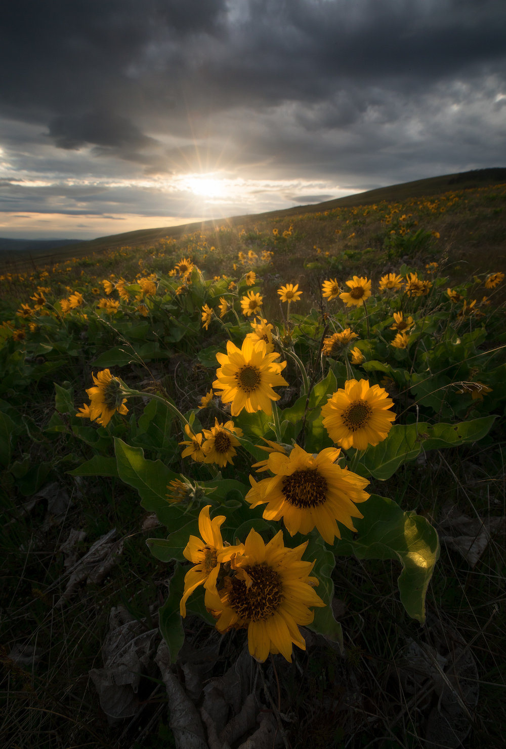 dalles-mountain-sunset.jpg