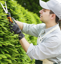 hedge_trimming-200x207.png