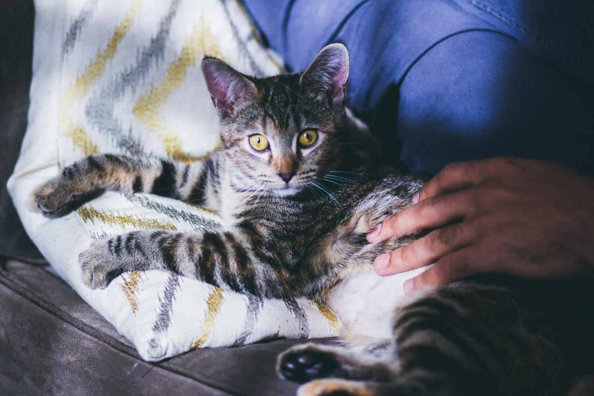 Olivia The Cat-2