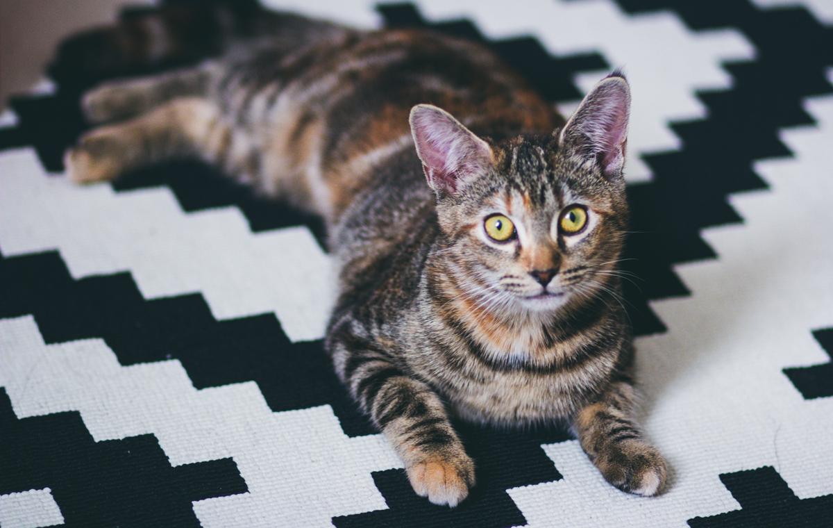 Olivia The Cat